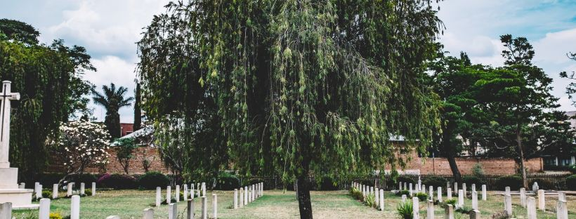 Tree in the middle of a cemetry