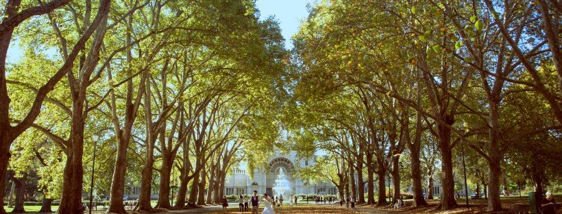 Tree-lined path leading to the Royal Exhibition Building in Carlton Gardens