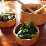 Garden Lettuce w Vinegar Dressing