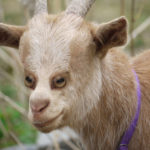 Animals with Front Eyes by Kiyoi