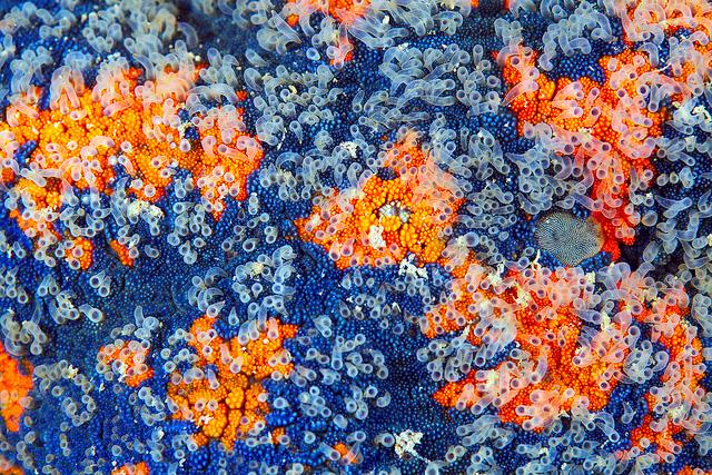 macro-shots-of-corals-by-alexander-semenov-3