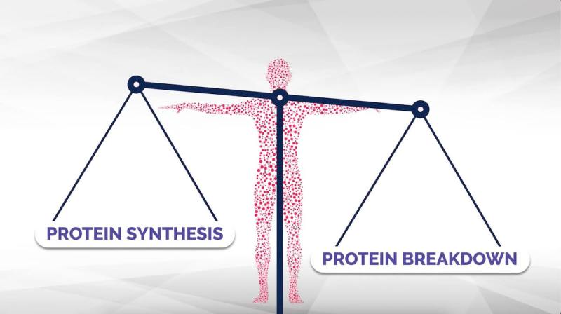 protein-powder-muscle-growth-protein-synthesis