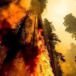 Thousands fight wildfires threatening California's sequoias 💥👩👩💥