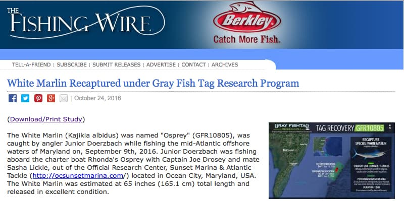 GrayFishTag in the Fishing Wire