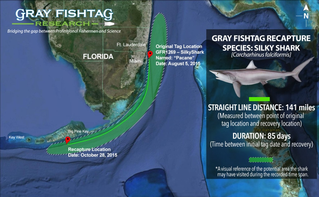 GFR1269–Silky-Shark-Recapture