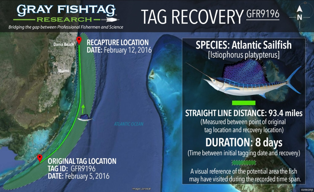 GFR9196-Atlantic-Sailfish-Recovery