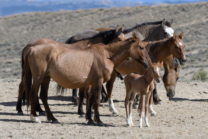 Brave's band of horses in Sandwash Basin