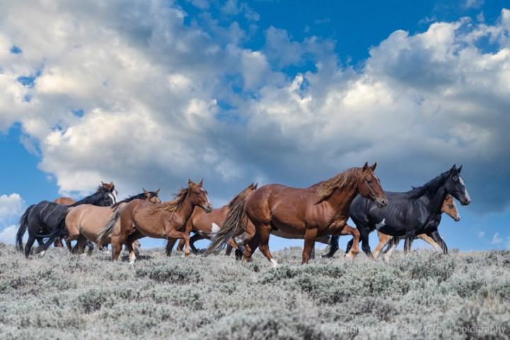 Band of wild horses in Sandwash Basin, Colorado