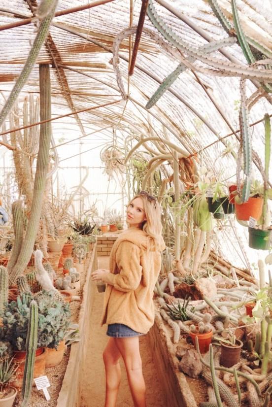 picture in moorten botanical garden in palm springs