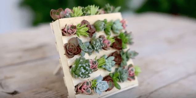 Get Creative with Succulents