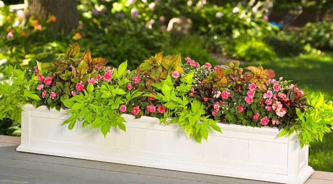 Get Beautiful Garden Color Fast!