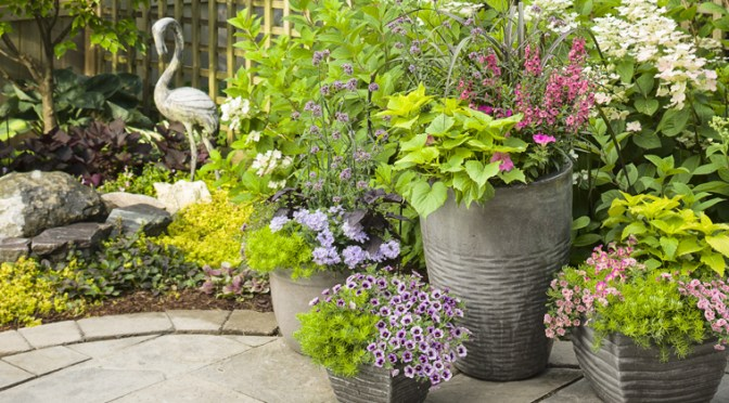 2018 Proven Winners National Container Garden Recipes