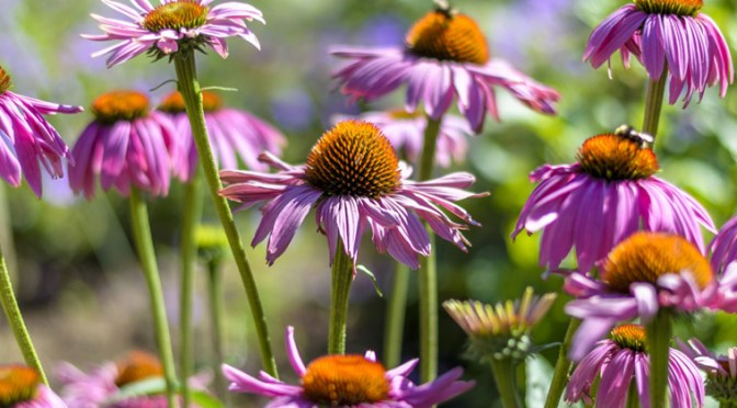 Get Your Garden Back to its Roots by Incorporating Native Plants!