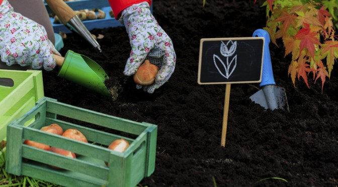 Planting Spring Flowering Bulbs – FAQ