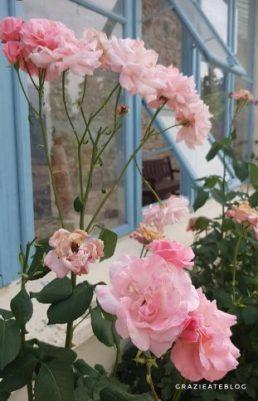 jardim-das-rosas