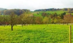 The meadows surrounding the Buschenschank Sattler
