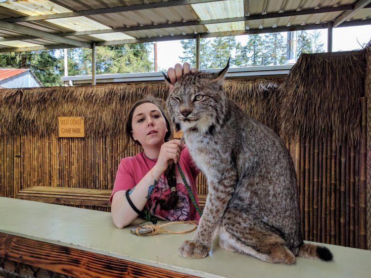 Lynx at West Coast Game Park Safari