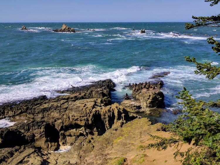 Sea Lions in the Distance at Cape Arago State Park