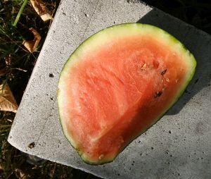 polski arbuz zielony