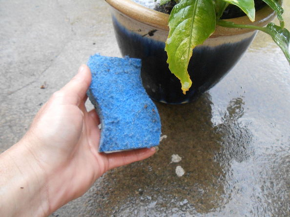 cleaning-tips-garden-plants-inside-bug-free-cleaning-tips-container-gardening-gardening (5)