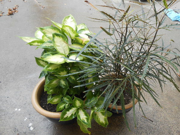 cleaning-tips-garden-plants-inside-bug-free-cleaning-tips-container-gardening-gardening (6)