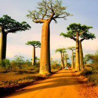 The most unusual forests on the planet!