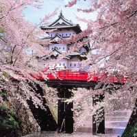 Great Atmosphere, Cherry Blossoms in various cities of the world!