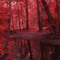 Amazing, Red, Autumn, on Great Atmosphere