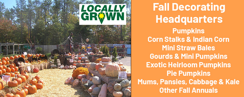 Fall Decorating Headquarters. Pumpkins, Corn Stalks and Indian Corn, Mini Straw Bales, Gourds and Mini Pumpkins, Exotic Heirloom Pumpkins, Pie Pumpkins, Mums, Pansies, Cabbage and Kale, Other Fall Annuals.