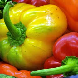 Peppers are also susceptible to blossom end rot