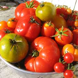 A bowl full of tomatoes