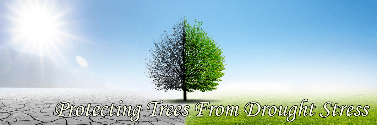 Protecting Trees From Drought Stress