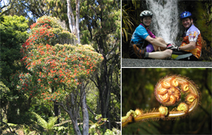A bike ride through the rainforest is one of the highlights of exploring New Zealand by bike - Great Bike Tours