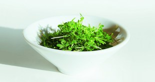 cress-pesto-recipe