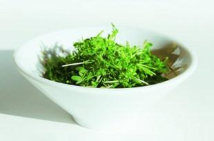 cress-pesto-recipe