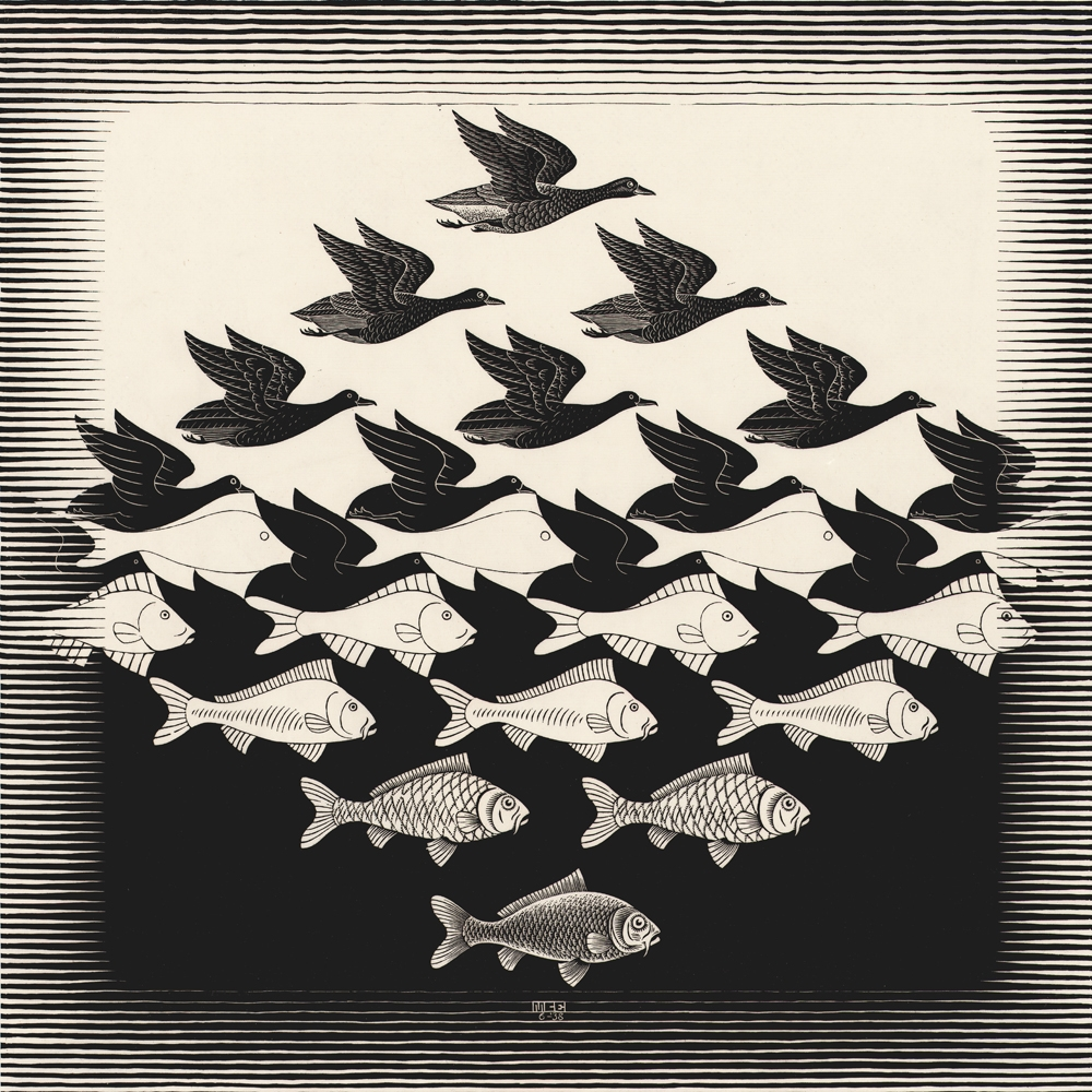 de peixes e pássaros...