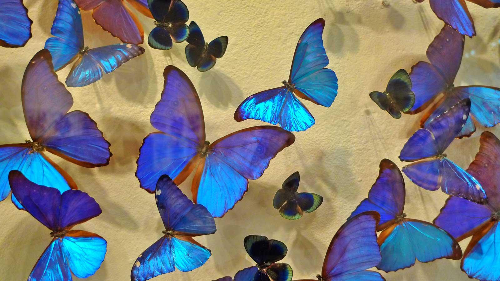 the butterfly people san juan 1 - Cierra Butterfly People