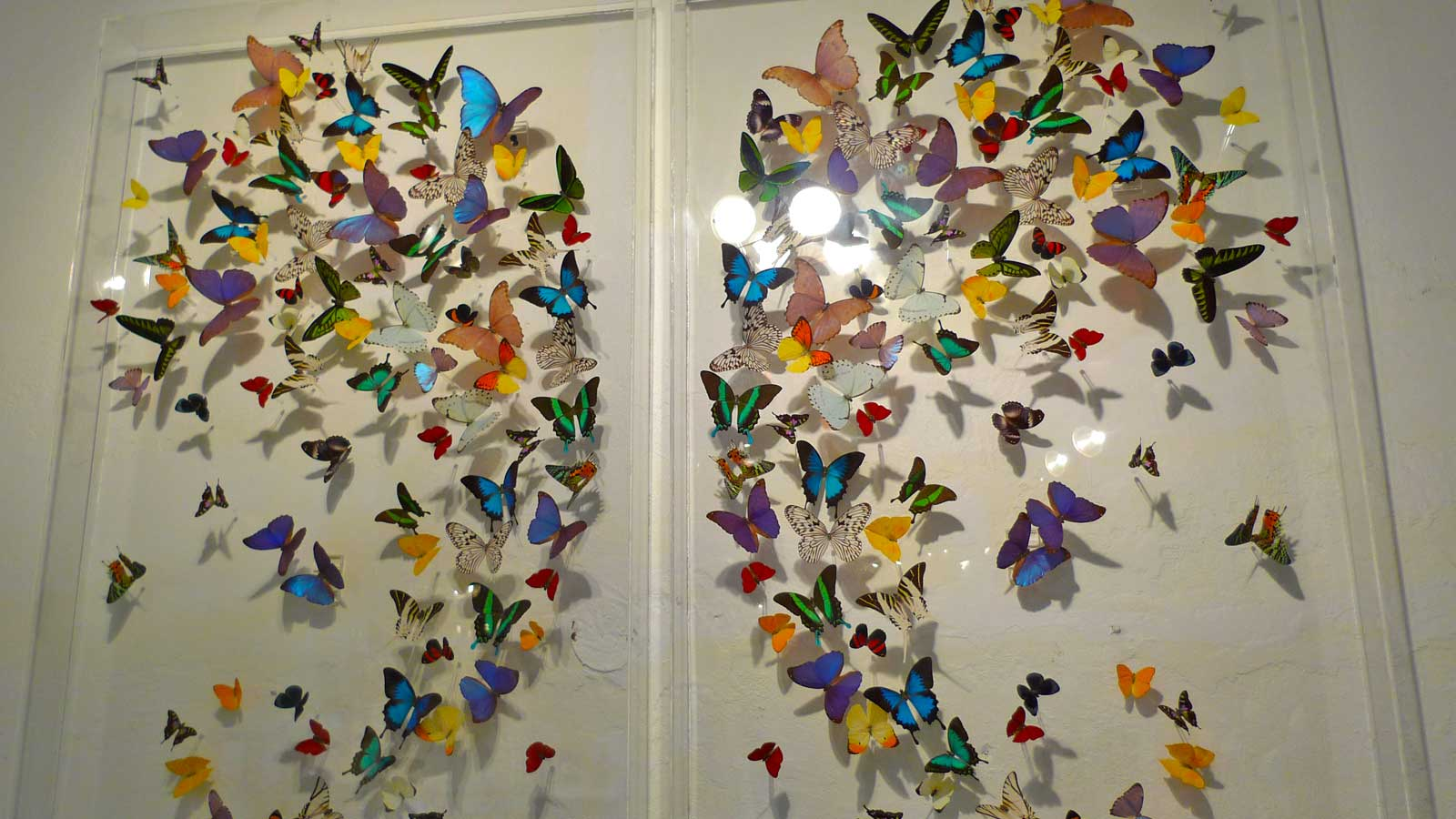 A Unique Gallery In Puerto Rico Highlights The Beauty Of Nature. Keri Jones Discovers Butterfly Art In The Old City Of San Juan