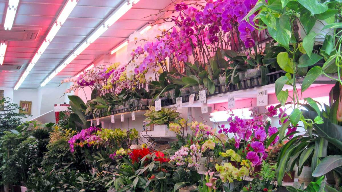 Hong-Kong-flower-market-1