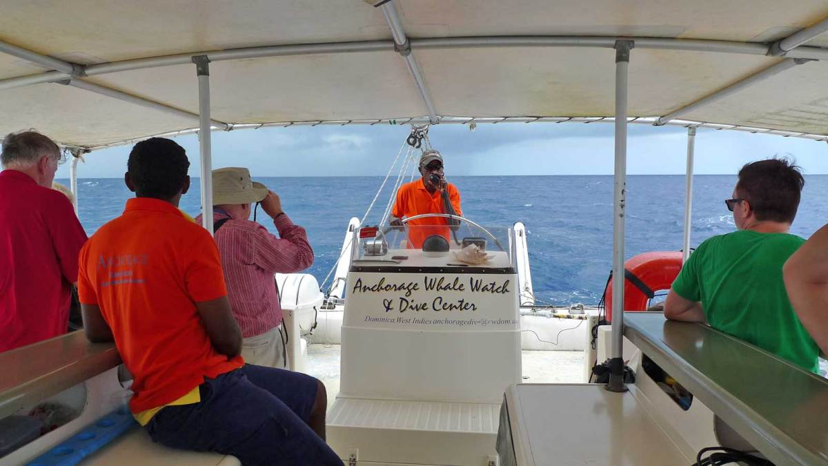 dominica_whale-watching-boat