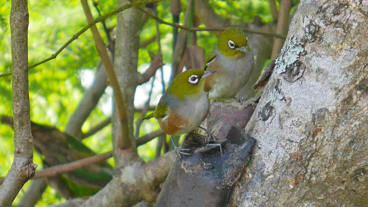 barrier_birds