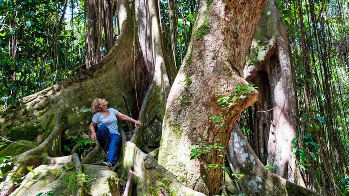 st-kitts-rainforest-travelbunny