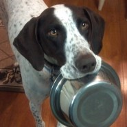 Chase and his bowl