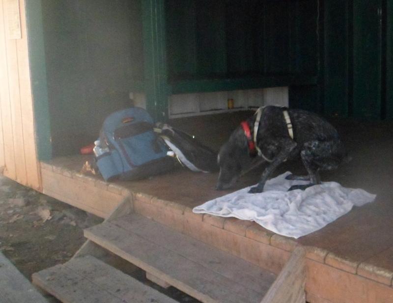 darlington shelter