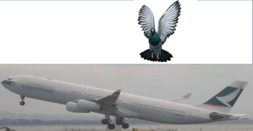 Pigeon vs plane