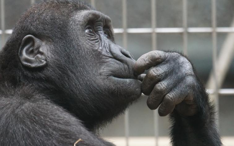 Judy And The Universe   Greater Ape