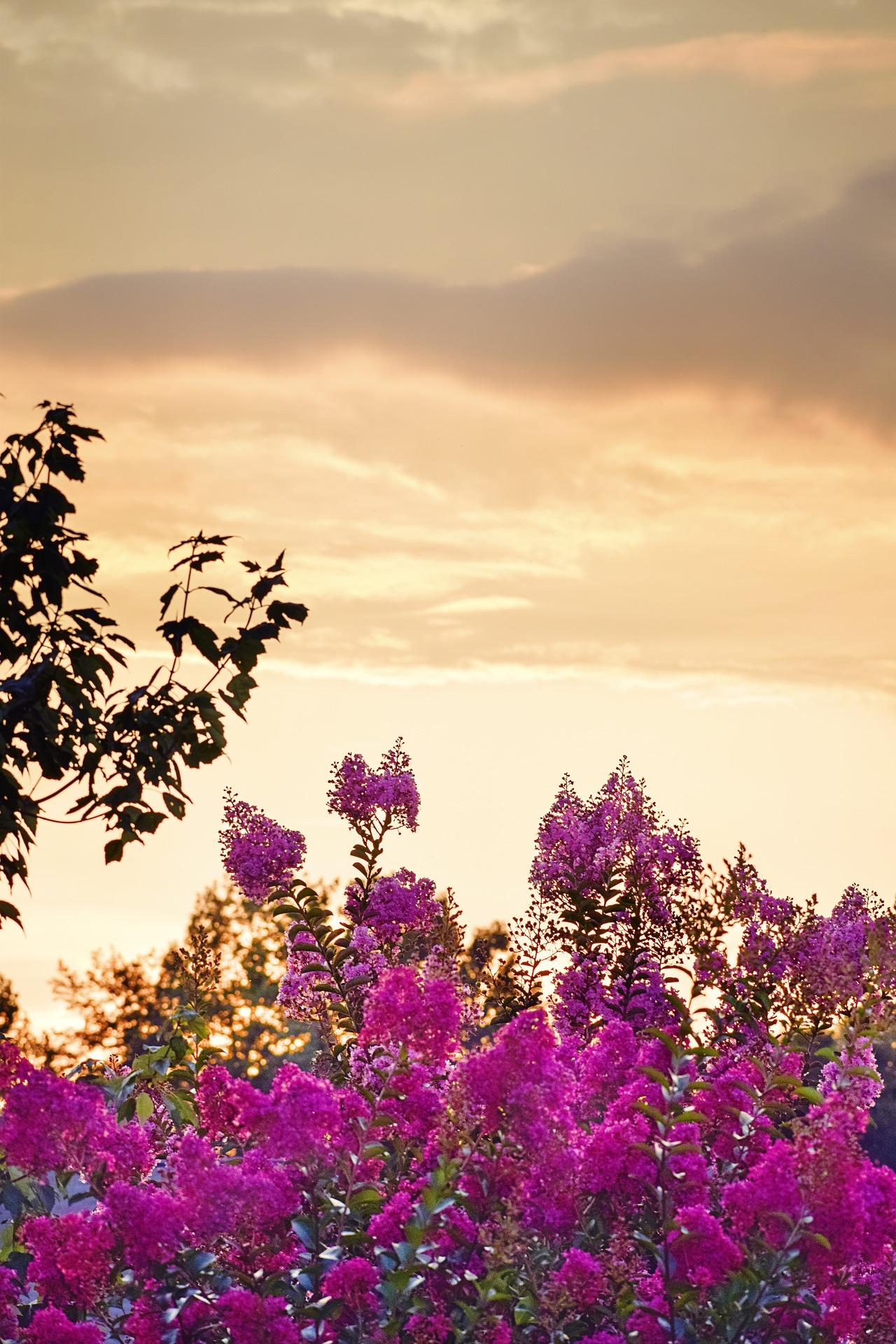 sunset-2612295_1920