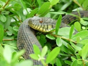 Snake Identification at Mercer @ Mercer Botanic Gardens | Humble | Texas | United States