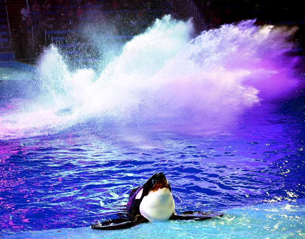 SeaWorld Orca show