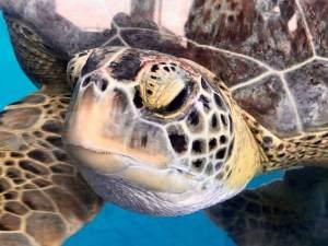 Turtle Patrol @ Galveston Island State Park  | Galveston | Texas | United States